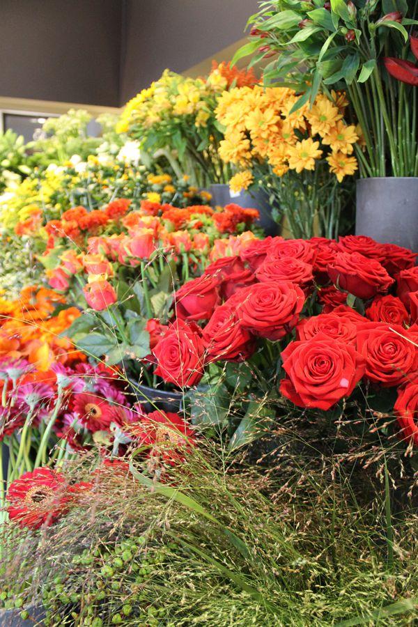 descaplant fleurs et plantes